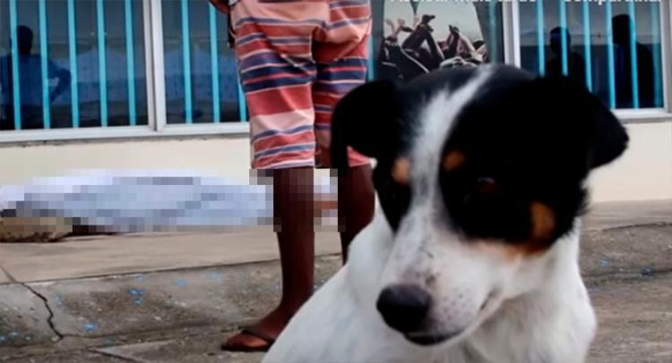 Cão permaneceu ao lado do corpo até a sua retirada