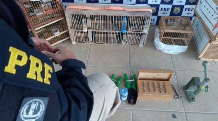 Aves seriam transportadas para a Paraíba - Foto: Divulgação I PRF