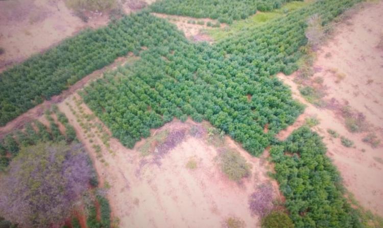 Polícia utilizou drones para localizar a plantação, após denúncias - Foto: Divulgação | SSP