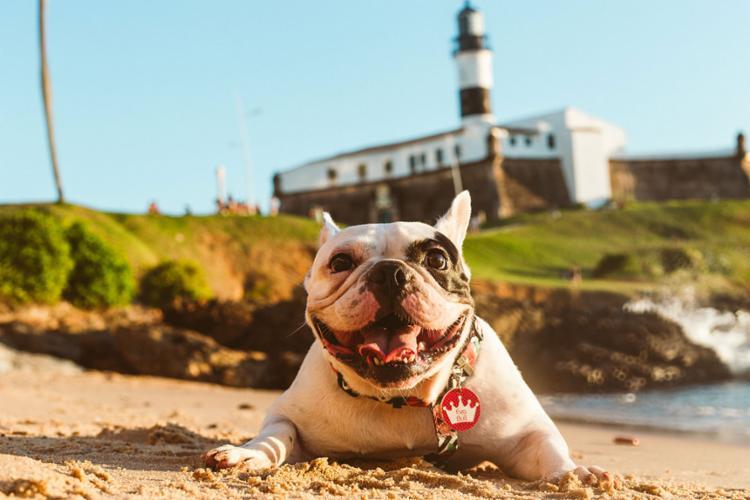 Eva é uma das cachorrinhas baianas que está cada vez mais famosa nas redes - Foto: Reprodução | Arquivo Pessoal