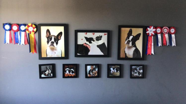 Os cachorros de Ricardo ganham prêmios em competições e mimos dos seguidores