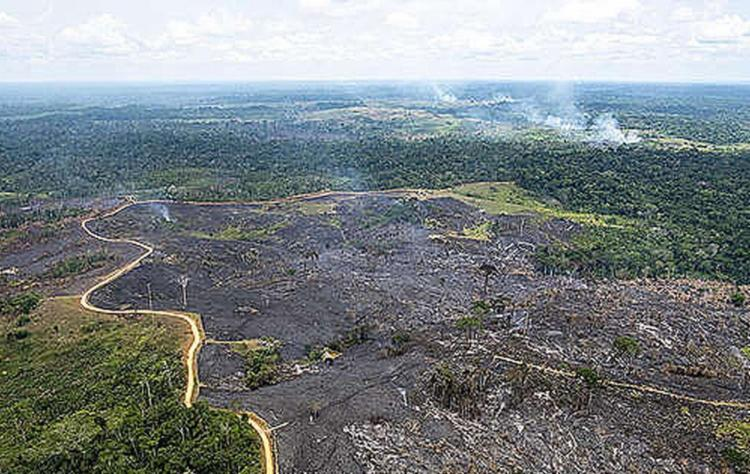 A ação autoriza o envio de militares das Forças Armadas para ajudar o estado no que for necessário para minimizar queimadas - Foto: Reprodução l greenpeace.org/brasil