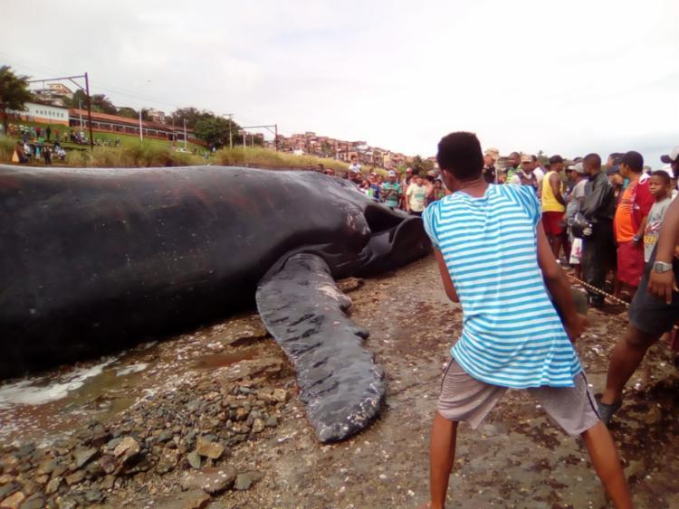Curiosos estão no local acompanhando o processo de resgate - Foto: Joá Souza | Ag. A TARDE