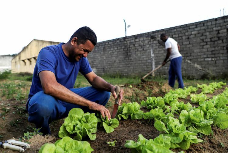 Mesmo sem apoio, os custodiados trabalham diariamente na horta - Foto: Uendel Galter | Ag. A TARDE