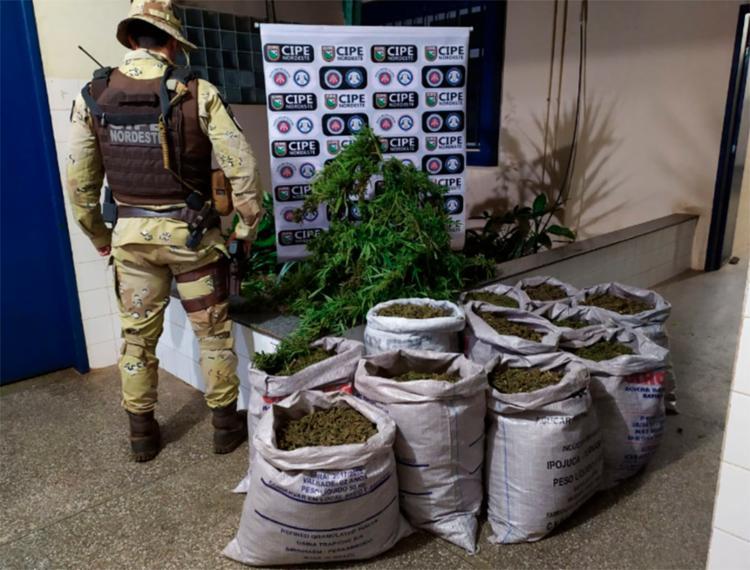 Droga foi encontrada em diferentes formatos como sacos, tabletes, plantações, e porções prontas para comercialização