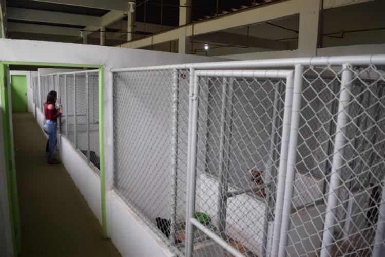 O centro de Jacobina terá canis de observação, individuais e para adoção - Foto: Divulgação | MP-BA