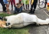 Cavalo morre após ser eletrocutado ao pisar em fio desencapado | Foto: Reprodução | Voz da Bahia