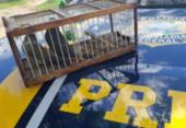 Homem é detido por manter aves silvestres em gaiola | Foto: Divulgação | PRF