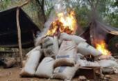 PF destrói 3 mil toneladas de maconha de plantações no Paraguai | Foto: Divulgação | Polícia Federal