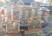 Polícia apreende 43 pássaros silvestres em Porto Seguro | Foto: Divulgação | SSP-BA