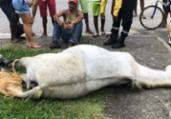 Cavalo morre eletrocutado após pisar em fio desencapado | Reprodução | Voz da Bahia
