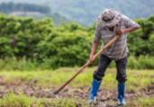 STF garante terras a produtores rurais   Divulgação   Freepik