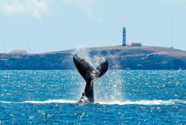 MPF entra com ação para impedir leilão de petróleo ao lado de Abrolhos | Projeto Baleia Jubarte