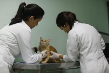 Cães e gatos podem ter vírus da covid-19, aponta pesquisa |