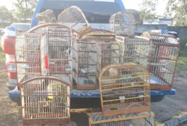Polícia apreende 43 pássaros silvestres em Porto Seguro | Divulgação | SSP-BA