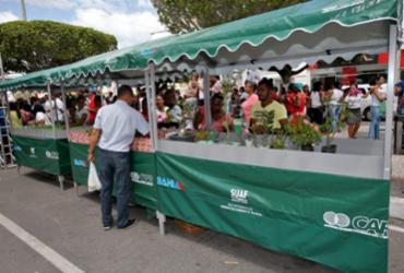 Pavimentação e ações voltadas à Agricultura Familiar beneficiam Retirolândia