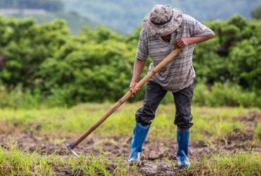 Supremo Tribunal Federal garante terras a produtores rurais | Divulgação | Freepik