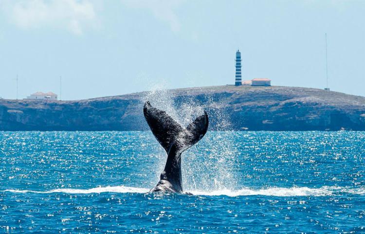 Região apresenta a maior biodiversidade do Oceano Atlântico Sul - Foto: Projeto Baleia Jubarte