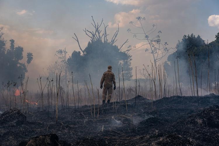 Verba oriunda da Petrobras será investida em ações de preservação - Foto: Mayke Toscano l AFP