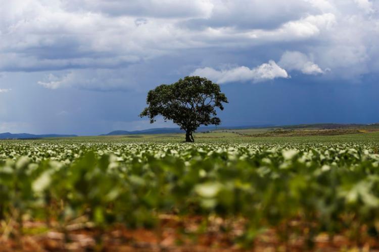A cidade baiana teve R$ 3,6 bilhões em valor de produção - Foto: Marcelo Camargo | Agência Brasil