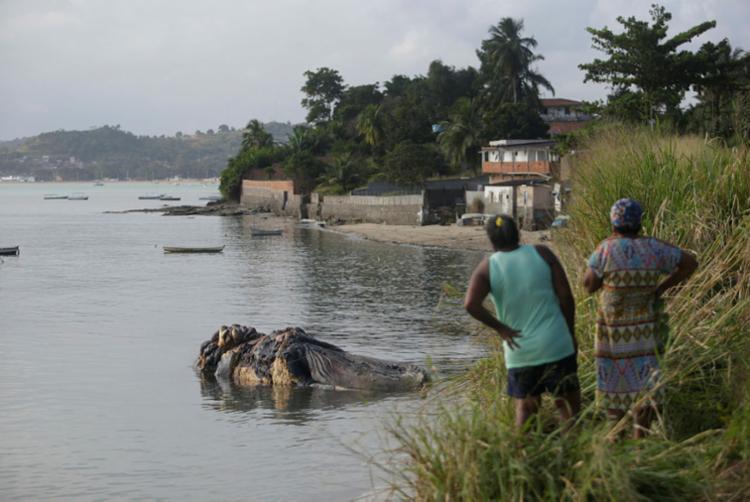 Baleia jubarte encalhou na praia de Coutos na última sexta, 30