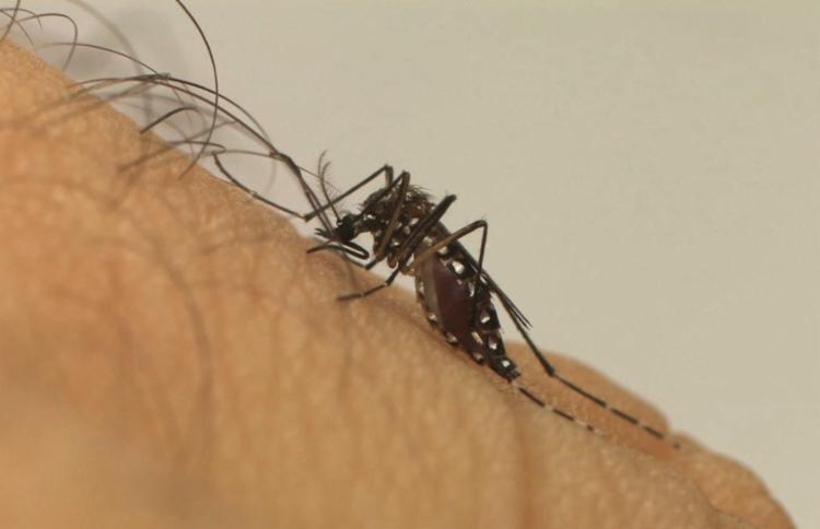 A taxa de incidência da dengue no país é 690,4 casos a cada 100 mil habitantes - Foto: Divulgação | Fiocruz