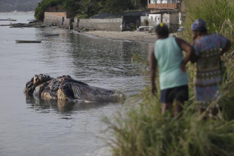 Carcaça da baleia na praia do bairro de Coutos - Foto: Raphael Muller l Ag. A TARDE