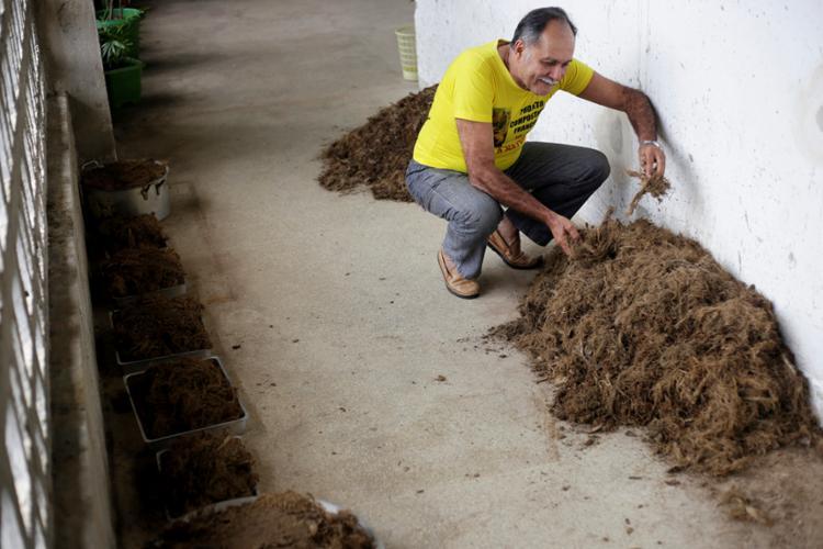 Professor Petronilio conta que parte do adubo é doado para manter hortas em escolas públicas, creches e na Colônia Penal Lafayete Coutinho