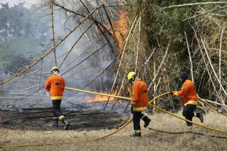 Doze bombeiros e duas viaturas foram mobilizados para apagar as chamas - Foto: CBMDF | Divulgação