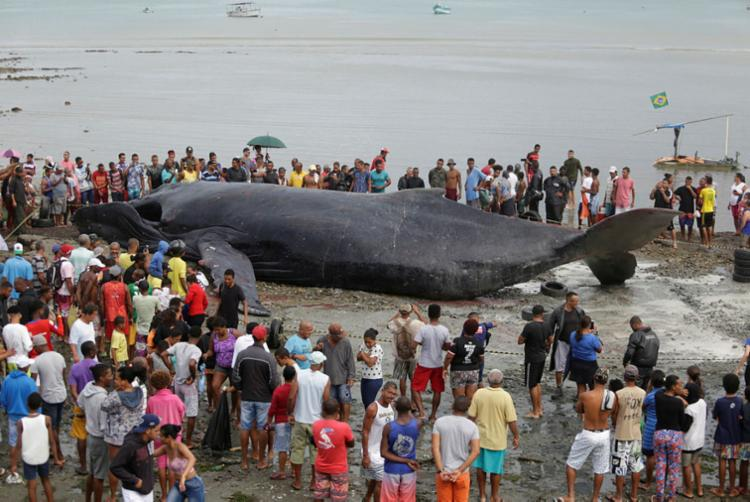 Baleia morreu ao encalhar em Coutos. Animal pesava cerca de 39 toneladas - Foto: Joá Souza   Ag. A TARDE