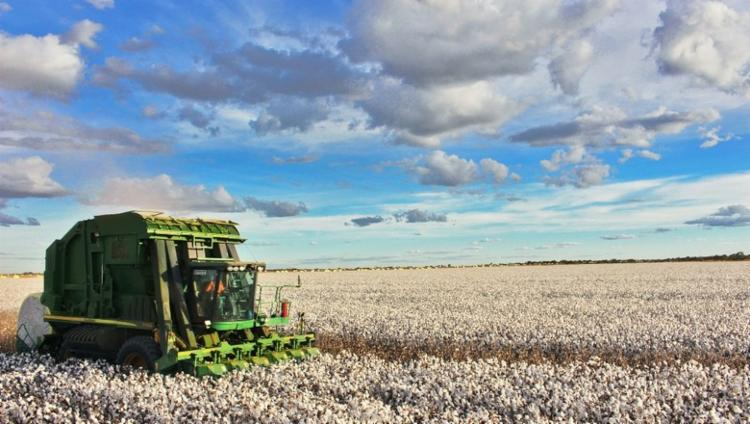 A estimativa é que todos terminem a colheita até o dia 30 de setembro - Foto: Divulgação | Abapa