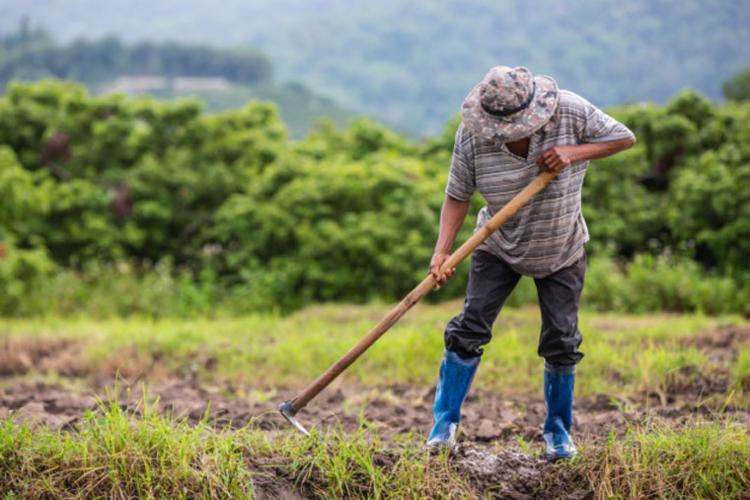 No mesmo edital, publicado dia 13 de setembro, o cartório revalidou as matrículas dos produtores rurais - Foto: Divulgação | Freepik