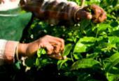 Produtores rurais poderão refinanciar dívidas com juros de 8% ao ano | Foto: