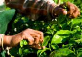Produtores rurais poderão refinanciar dívidas com juros | Reprodução Freepik