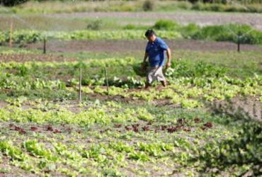 Irrigantes têm direito a desconto em conta de luz   Joá Souza   Ag. A Tarde