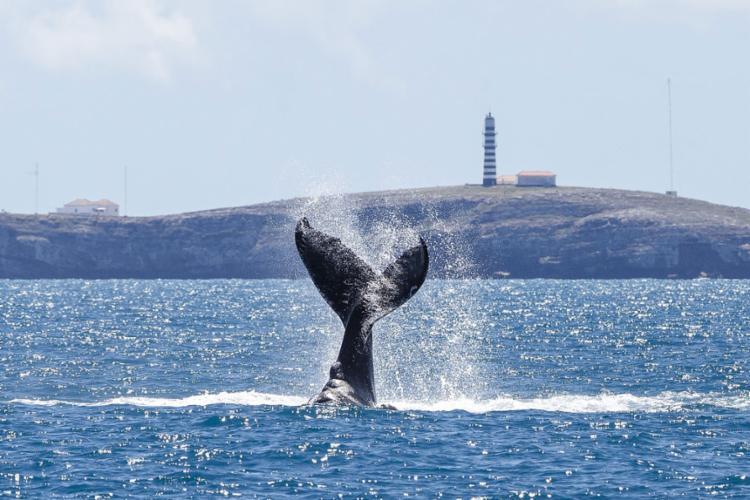 Arquipélago de Abrolhos tem a maior biodiversidade de todo o Atlântico Sul Foto: Projeto Balia Jubarte   Divulgação   31.8.2017 - Foto: Projeto Balia Jubarte   Divulgação   31.8.2017