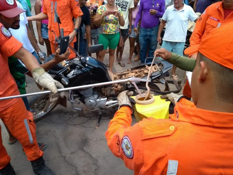 Cobra foi resgatada e devolvida para a natureza - Foto: Divulgação | CBMBA