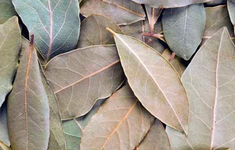 Horta fica localizada no Terreiro Ilê Axé da Nação Ketu - Foto: Imagem Ilustrativa