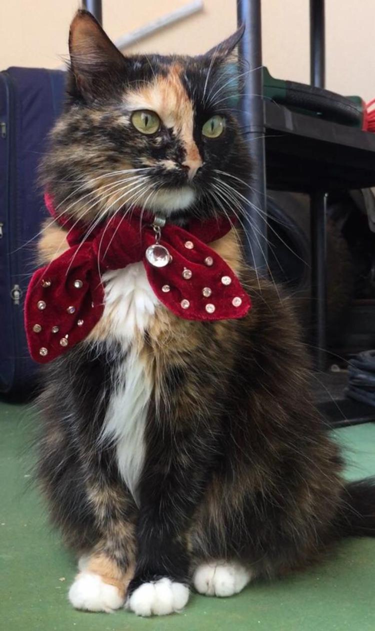 No Outubro Rosa, os pets também merecem atençaõ especial para prevenção - Foto: Divulgação