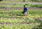 Governo autoriza ocupação de produtores em polo de irrigação na Bahia | Foto: