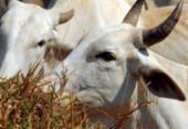Determinação do Ministério da Agricultura suspende a produção de carne bovina para a China | Foto: Arquivo | Agência Brasil