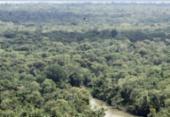 Desmate na Amazônia voltou a subir, apontam dados do Inpe | Foto: Cristino Martins | Ag. Pará