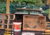 Aves silvestres engaioladas são resgatadas na BR 116 | Divulgação | PRF