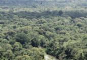 Desmate na Amazônia voltou a subir, aponta Inpe | Cristino Martins | Ag. Pará