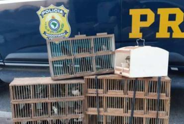 Pássaros silvestres transportados irregularmente são resgatados em estrada | Divulgação | PRF-BA