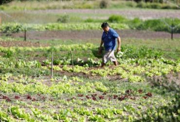 Governo autoriza ocupação de produtores em polo de irrigação na Bahia |