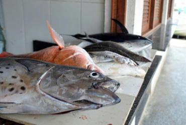 Relatório da Bahia Pesca mostra que peixes não estão contaminados | Shirley Stolze | Ag A TARDE