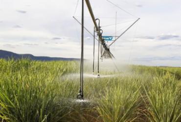 Setor sucroenergético deverá potencializar economicamente o Médio São Francisco