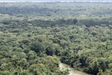 Desmate na Amazônia voltou a subir, apontam dados do Inpe | Cristino Martins | Ag. Pará