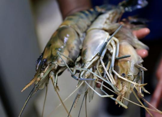 Pesquisadores da Ufba contestam governo sobre consumo de pescados | Uendel Galter | Ag. A TARDE
